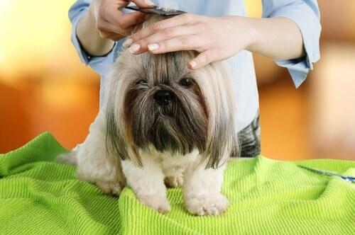 Kosmetik bei Hunden: Friseur