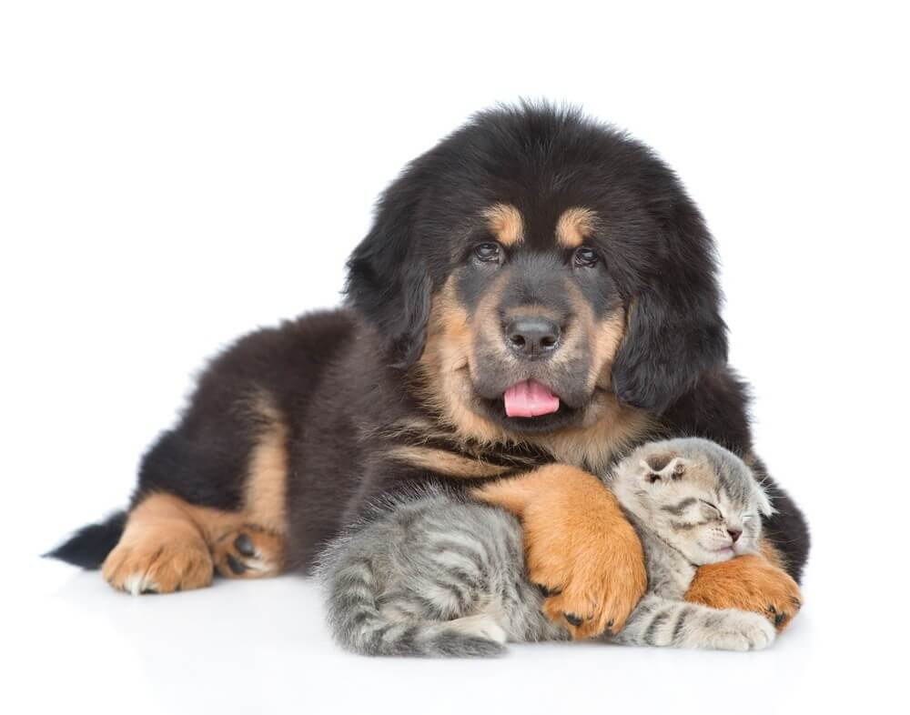 Hund-Katze