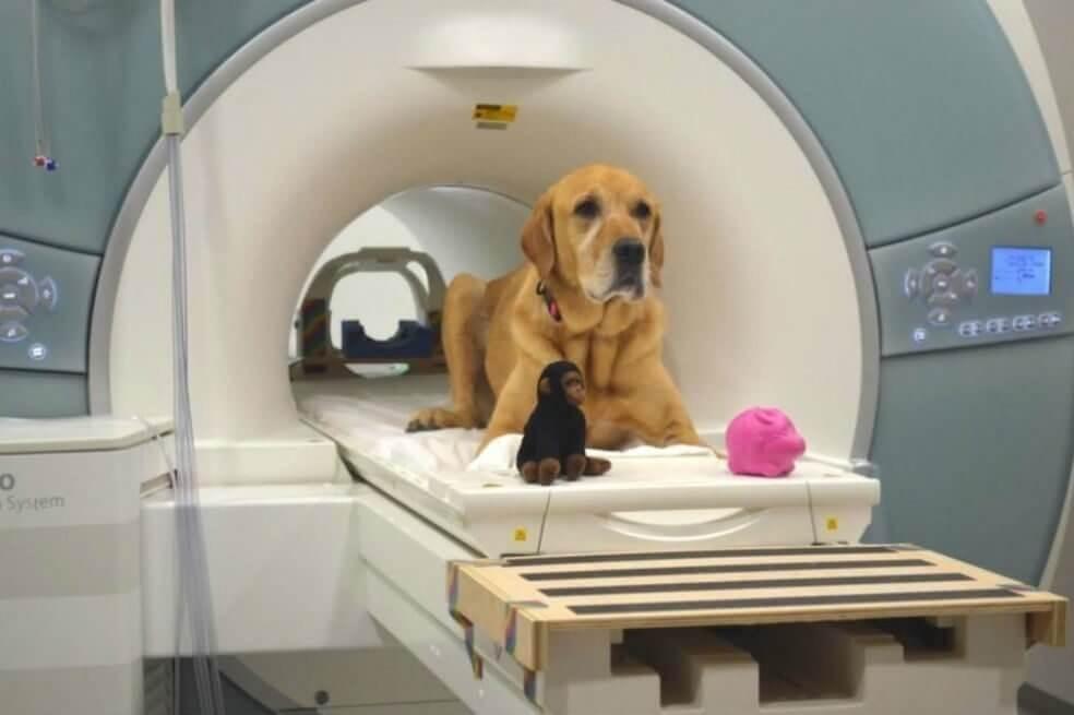 Hund in einem MRT