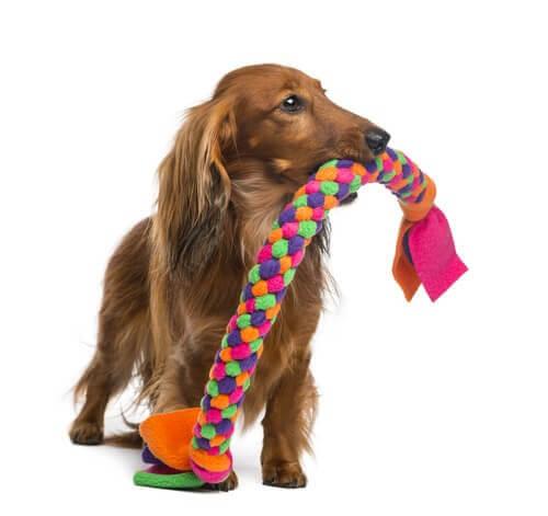 Hund-Beißspielzeug