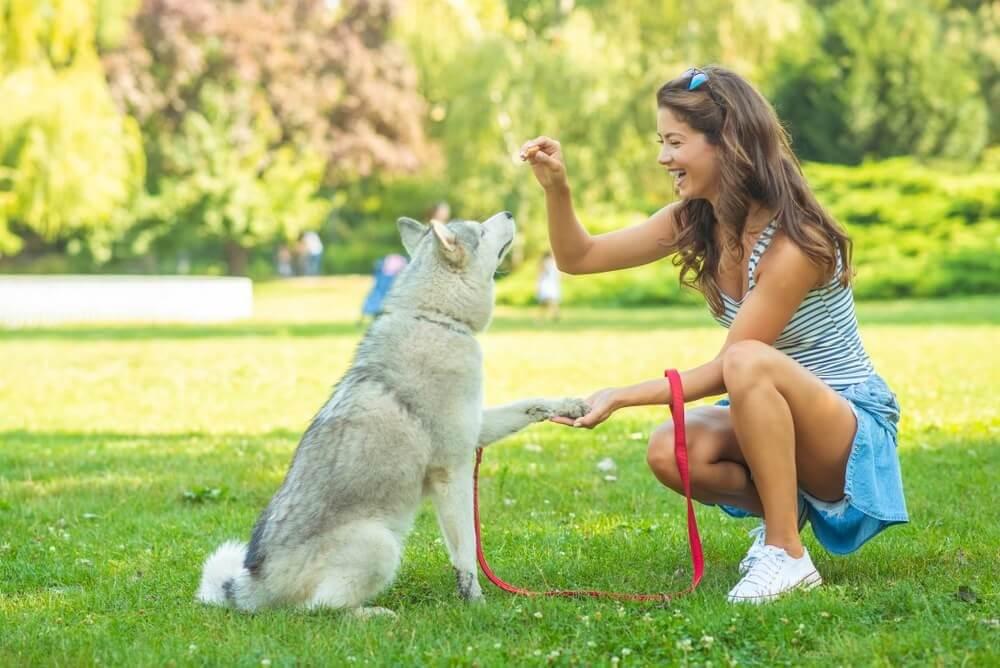 Hund-Training