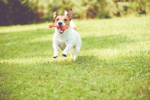 Hund-mit-Knochen