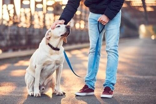 Wie finde ich den besten Hundesitter?