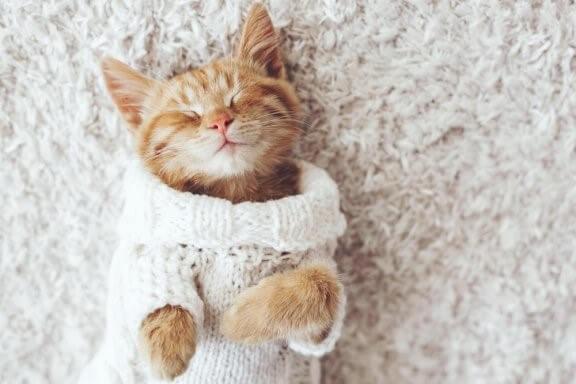 Deine Katze mag die Kälte nicht