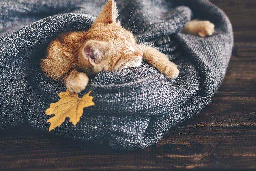 Kätzchen-Decke