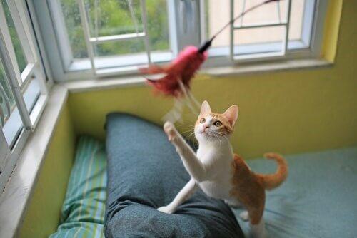 Kätzchen-spielt