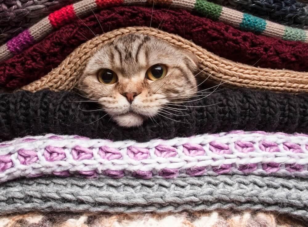 Katze-Decken