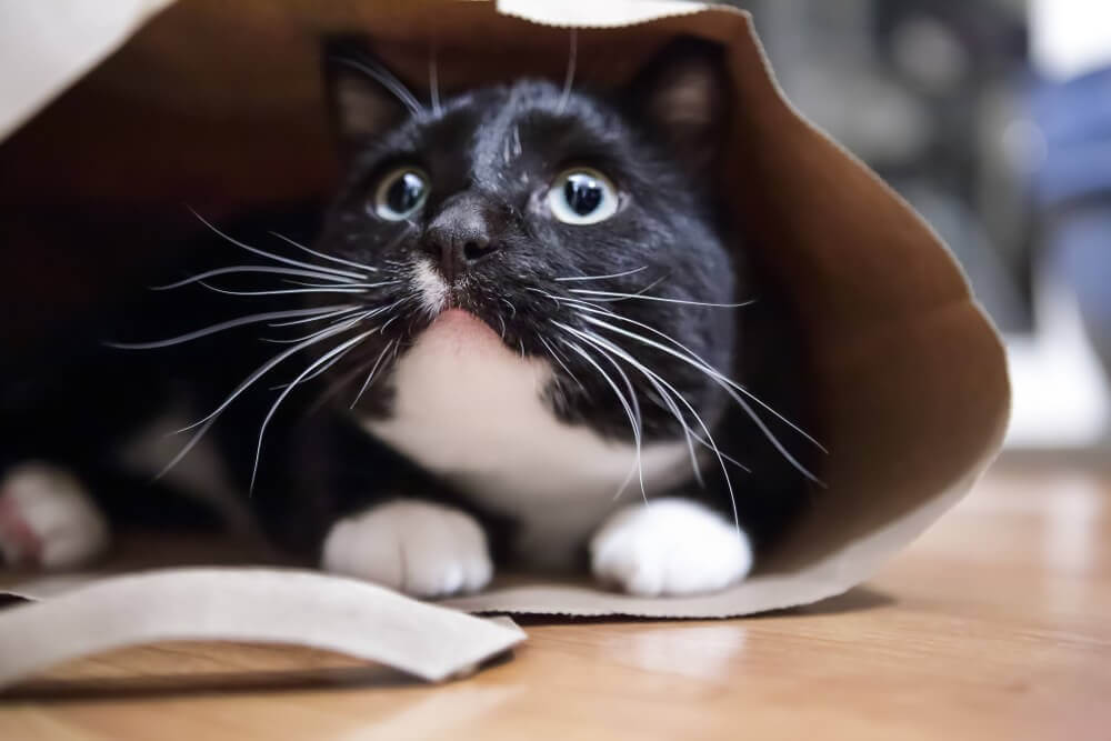 Katze-Tüte