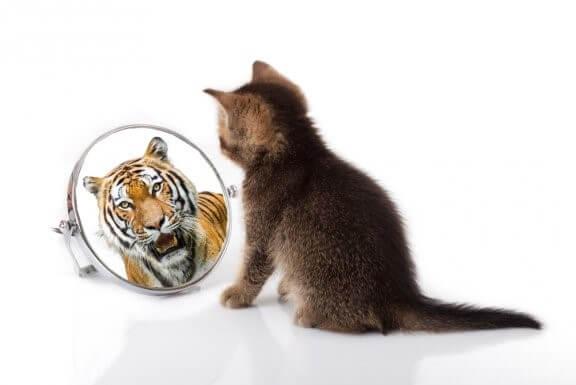 Was haben Katzen und Tiger gemeinsam