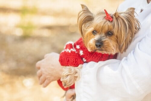 Kosmetika: Kleiner Hund mit Spange im Haar