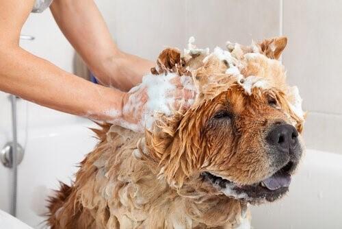 Gefahren bei der Verwendung von Kosmetika bei Hunden