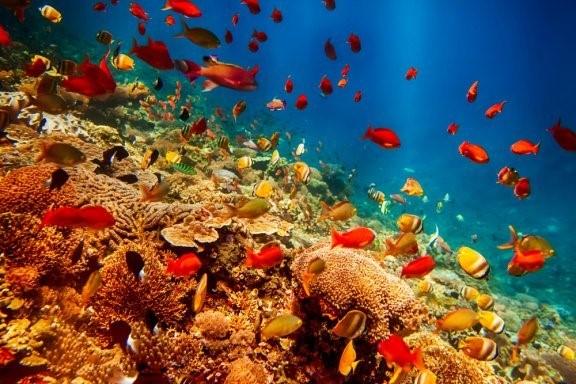 Die seltsamsten Meerestiere der Welt