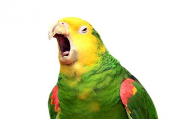 Verstehen Papageien was sie sagen?