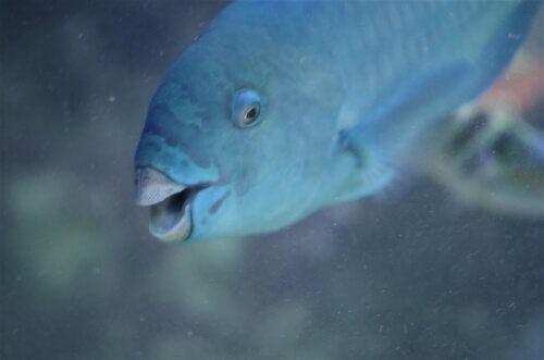 Papageienfisch-Meer