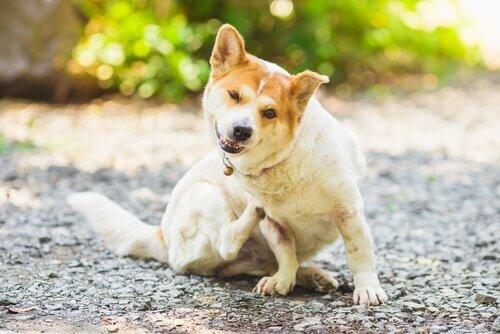 Wie kann man Parasiten bei Hunden und Katzen verhindern?