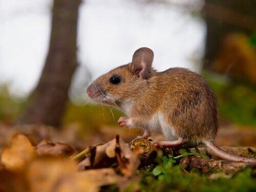 Pheromone: die chemische Sprache der Tiere
