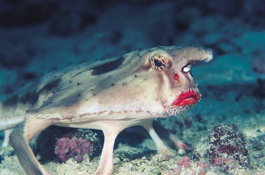 Seefledermäuse