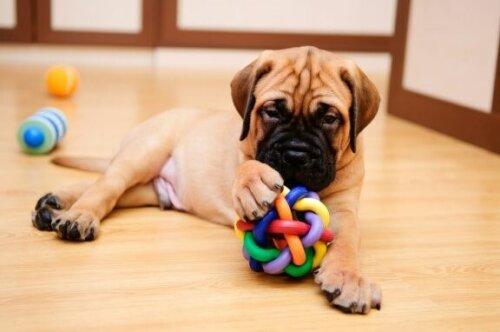 Spiele, die du mit deinem Hund zu Hause spielen kannst
