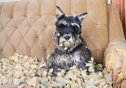 Tipps, um Stress bei Hunden zu reduzieren
