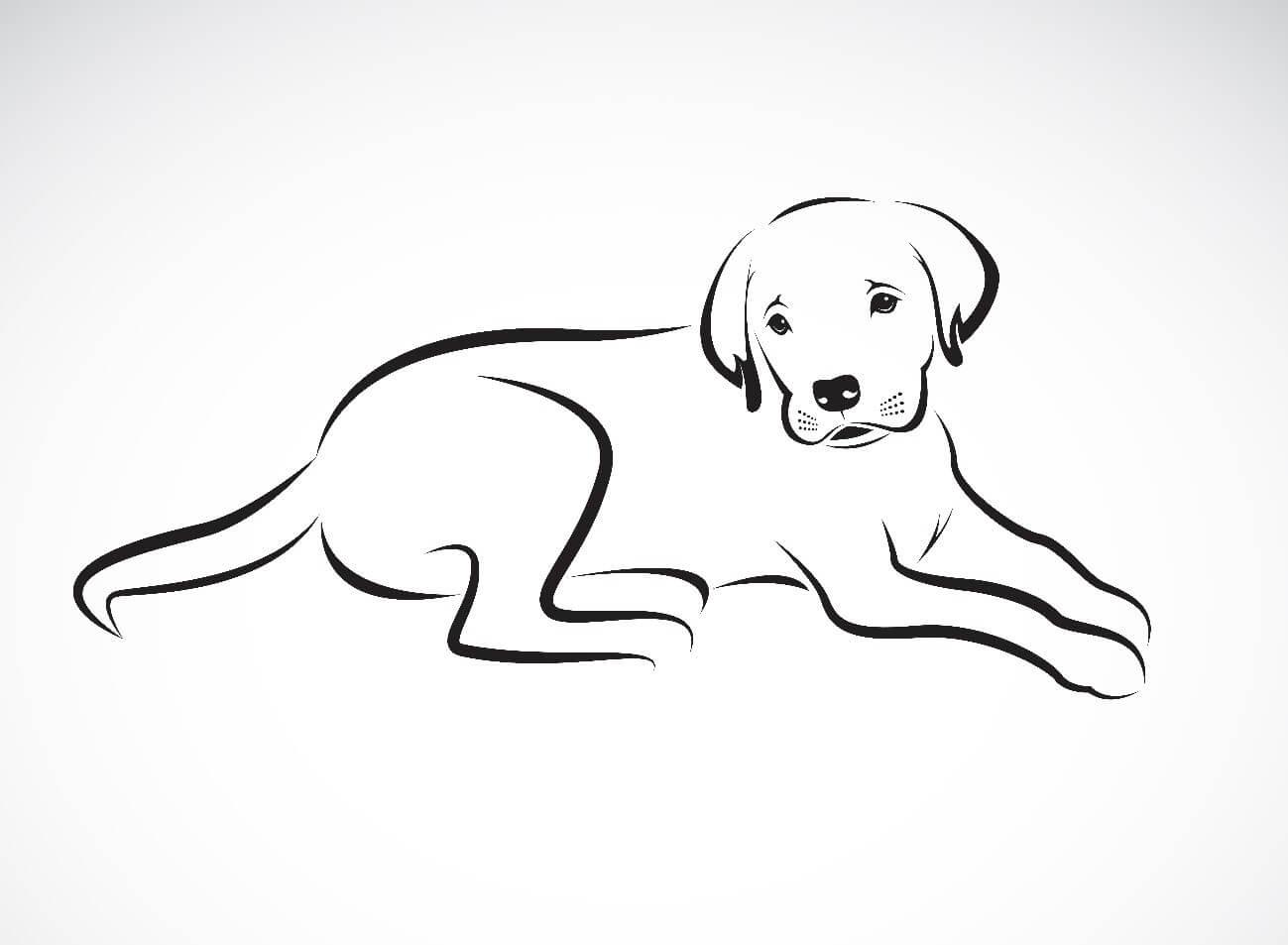 hunde zeichnen lernen  vorlagen zum ausmalen gratis