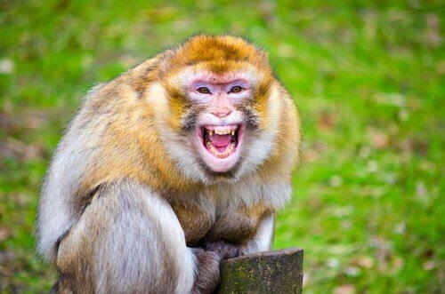 König Alexander I wurde von einem Affen gebissen