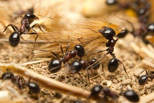 Ameisen arbeiten im Team