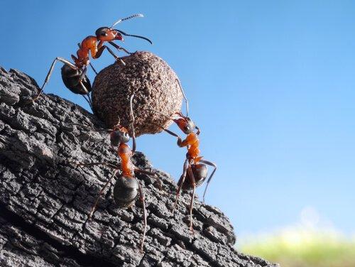 Ameisen: Kuriositäten und Erstaunliches