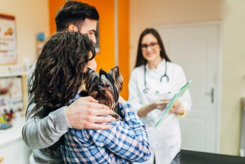 Tipps für den Besuch in der Tierklinik