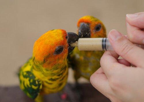 Brei für Jungvögel