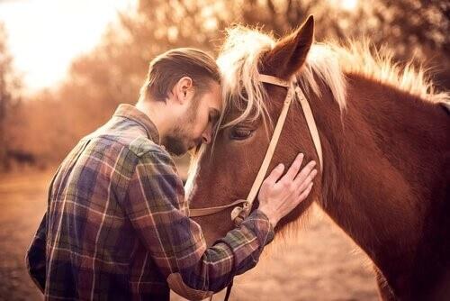 Wie erkennst du, ob dein Pferd dich liebt?