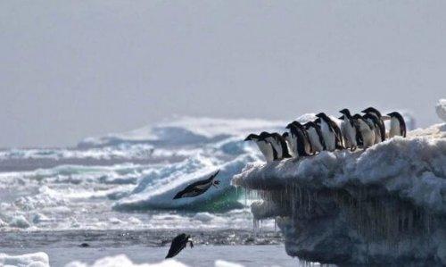Der Pinguinfriedhof in der Antarktis