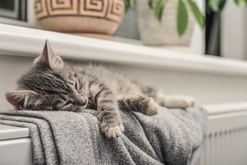 Nehmen Katzen die Energien von Personen wahr?
