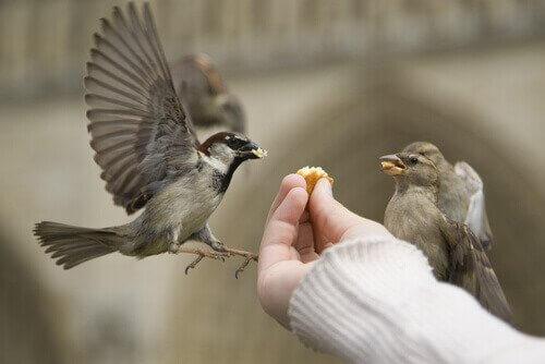 Die richtige Ernährung eines Vogels