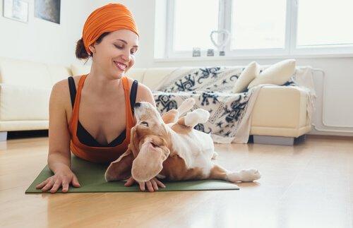 Der Nutzen von Doga für Hunde
