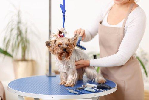 Entferne Hundehaare aus deinem Zuhause