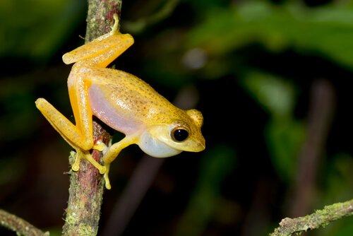 Frosch sitzt auf einem Ast