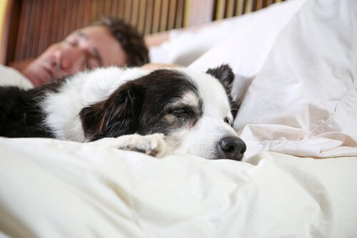 Hunde und Besitzer ähnlich verschlafen