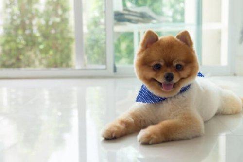 Hundefrisuren und spezielle Schnitte