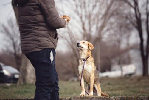 Hundepsychologie: alles, was du wissen musst