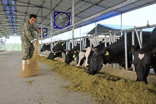 Hygiene und Gesundheit auf dem Bauernhof