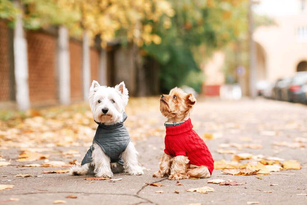 Kälte ist eine der Gefahren für Hunde