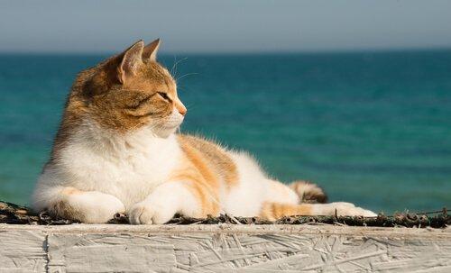 Katze abkühlen: Tipps für heiße Tage