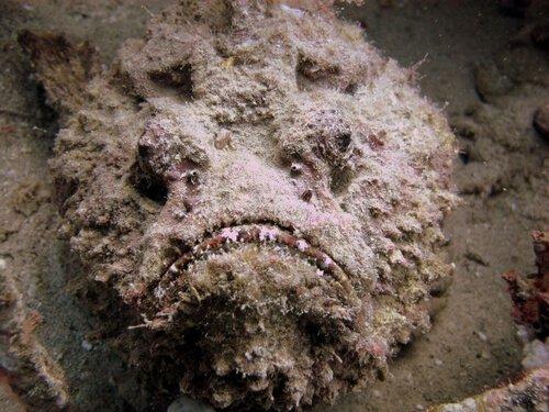 Lebensraum des Steinfisches