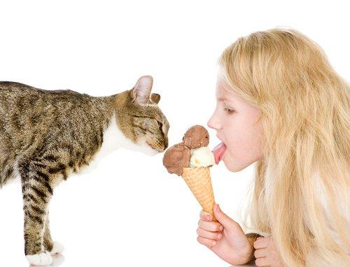 Mit Speiseeis Katze abkühlen
