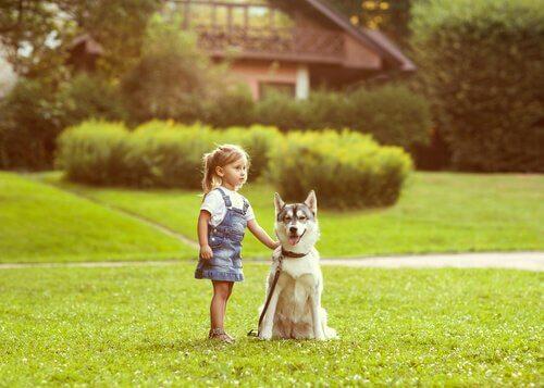 Der Orientierungssinn von Hunden
