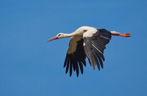 Orientierungssinn von Zugvögeln
