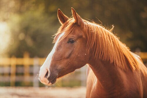 Pferde denken auf andere Weise