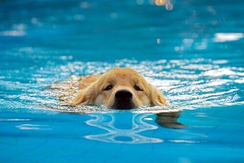 Poolspiele für Hunde - Schwimmen