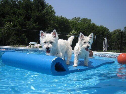 Poolspiele für Hunde - Spaß für die ganze Familie
