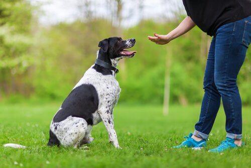 Angewandte Psychologie bei der Hundeerziehung